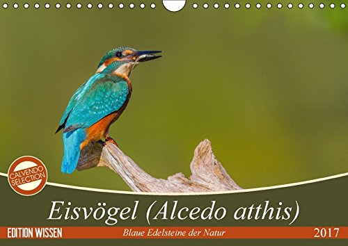 Eisvoegel (Alcedo atthis) - Edelsteine der Natur (Wandkalender 2017 DIN A4 quer): Eisvoegel - die kleinen bunten Gesellen in unserer Heimat (Monatskalender, 14 Seiten )