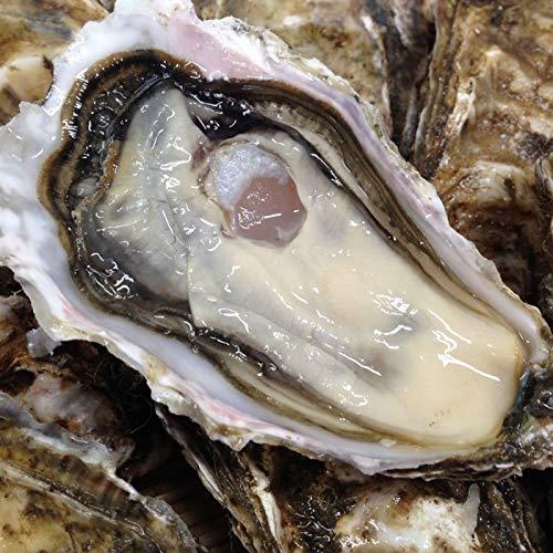 牡蠣 カキえもん 北海道産厚岸産 (LLサイズ 20個) 90〜130g/個 (生食用。牡蠣ナイフ同封冷蔵便)