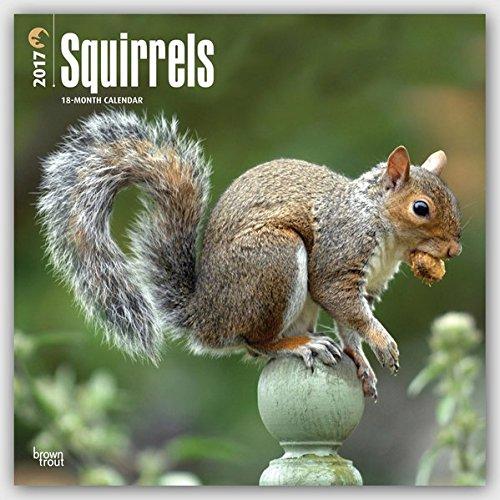 Squirrels 2017 Calendar