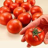 茨城県産 糖度9以上保証 スーパーフルーツトマト 約1kg とまと 高糖度