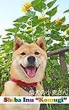 柴犬の小麦さん Shiba Inu