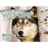 北米野生動物2019 壁カレンダー 野生動物 Smith-Southwestern