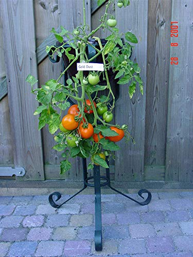 【SEED】Heirloom TomatoR Gold Dust エアルームトマト・ゴールド・ダスト(15 seeds)Or-18