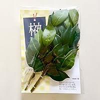 【 造花 榊 】 神棚用 2束 小サイズ 30cm 計4本|sakaki-33