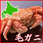 【毛蟹姿ボイル 冷蔵便】北海道産 活かにを朝ゆで直送!茹でたて毛ガニ 4尾 2.4kg前後
