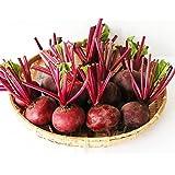 ビーツ Fresh Beet 2kg 無農薬野菜|甘くて濃い 沖縄・宮古島産 生ビーツ