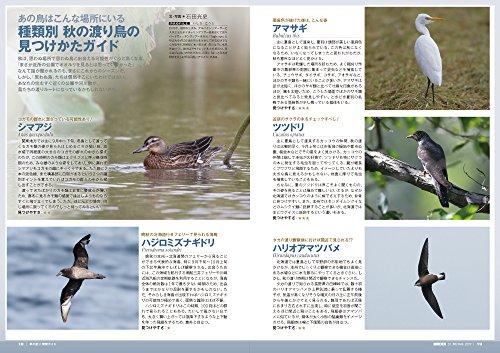 BIRDER(バーダー)2017年10月号 秋の渡り 観察ガイド/秋冬のヒタキ類