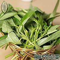 タイ柳の葉の水ほうれん草の盆栽は、ガーデンテラス鉢植えの植物盆栽50個を播種四季をロースト