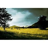 Sim、環境に優しい木製マテリアル、A GoodのためのパズルジグソーパズルPlayer 1000Piece 29.5X 19.6インチinボックスpresent-wrap : Morning Trees Sunlight Hills Grass