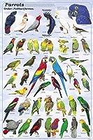 FeenixxラミネートオウムポスターMacaw Cockatoo cacatuidea Psittacidae 24x 36 24x36 Laminated Print 43237-2