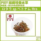 PIXY組織培養水草 ロタラspベトナムH'ra(無農薬、無菌、害虫無しの国内生産) …