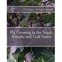 Fig Growing in the South Atlantic and Gulf States