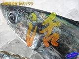 お刺身用 サワラ(大)3kg以上 山陰境港産