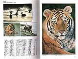 野生ネコの百科 最新版 (動物百科) 画像