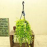 観葉植物:エスキナンサス トリコロール*吊り鉢