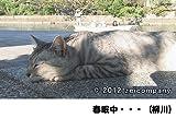 のら猫ニッポン?長崎・尾道から江ノ島・函館まで? [DVD]