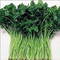 【メール便配送】国華園 野菜たね 健康野菜 三ツ葉(白茎) 1袋(10ml入)【※発送が国華園からの場合のみ正規品です】