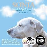 SONIA-白くなった黒ラブ・ソニア- 画像