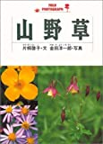 山野草 (Field photograph)