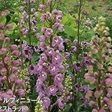 予約販売3月以降発送 宿根草の咲く庭 デルフィニウム アストラット 大苗12cmポット