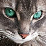 5D Diamond Painting Kits, DIY Embroidery Painting Wall Sticker for Wall Decor Full Drill Cat with Green Eyes (10 x 10inch)