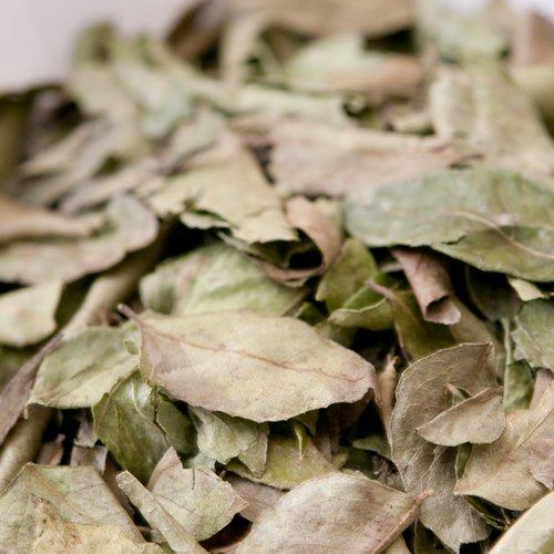 神戸アールティー カレーリーフ 500g 【100g×5袋】 Curry Leaf カリーパッタ Patta スパイス ハーブ 香辛料 業務用