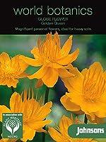 WB 英国ジョンソンズシード Johnsons Seeds world botanics collection Globe Flower=Troilius Golden Queen グローブ・フラワー(トロリウス)・ゴールデン・クィーン