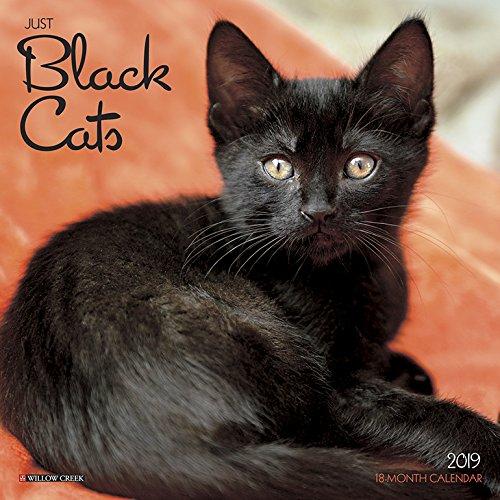 Black Cats 2019 Calendar