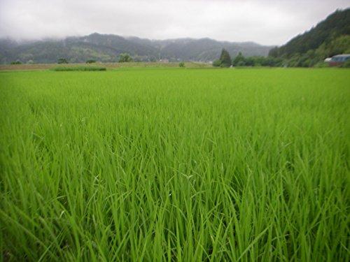 【精米】【 Amazon.co.jp 限定】宮城県産 無洗米 つや姫 10kg 平成30年産