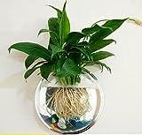 【SKZ】 壁掛け水槽 観葉植物 アクアリウム 透明 23cm (カラー小石 留め具付)