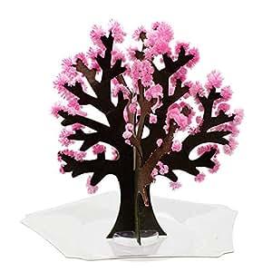 Magic梅 マジック梅(マジックプラム) 魔法の水を掛けると6時間で梅の花が満開に 新元号 令和グッズ おとぎの国