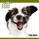 THE DOG カレンダー パピヨン 2020年