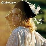 Seventh Tree 画像