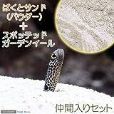 (海水魚)ばくとサンド パウダー(9L) + スポッテッドガーデンイール(2匹)セット 本州・四国限定[生体]
