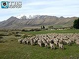 #33 星空の村テカポ(ニュージーランド)