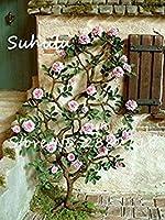 100個レアローズフラワー種子がfarmerlyでは美しい花盆栽ガーランド結婚式の装飾パーティー12ハンギング
