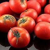 トマト そらのとまと フルーツトマト 桃太郎トマト 数量限定 市場直送(mn)