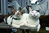 シンクロ姉妹猫 うちのとらまる (タツミムック) 画像