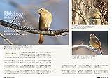 BIRDER(バーダー)2018年1月号 ルリビタキ・ジョウビタキ/鳥の色 事典【特別付録 BIRDER DIARY 2018】付き 画像