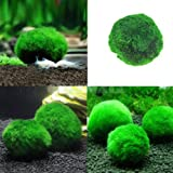 AuCatStore(TM) Marimo Moss Ball Live Algae Aquarium Fish Tank Landscape Ornament New