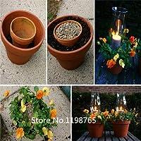 赤:2016ホットフクシア種子ランタン種子花種子バルコニー盆栽花種子 - 100ピース