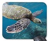 海亀のマウスパッド:フォトパッド*( 世界の野生動物シリーズ )