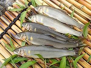 新潟県魚野川産 天然鮎(-60.0℃急速冷凍) (5匹 3L 125.0g以上)