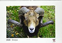 Sheeps 2020 - White Edition - Timocrates wall calendar with UK holidays / picture calendar / photo calendar - DIN A3 (42 x 30 cm)