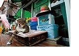 野良っ猫 街っ猫 画像