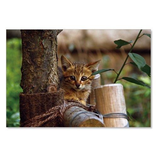 のら猫ポストカードシリーズ (a stray cat) No.009 〈千駄ヶ谷〉