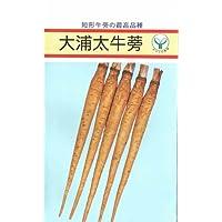 【種子】大浦太牛蒡 10ml