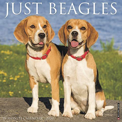 Just Beagles 2020 Calendar