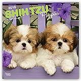 Shih Tzu Puppies 2018 Calendar