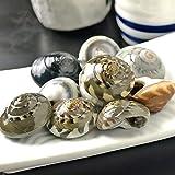 今や幻の貝と呼ばれる ながらみ